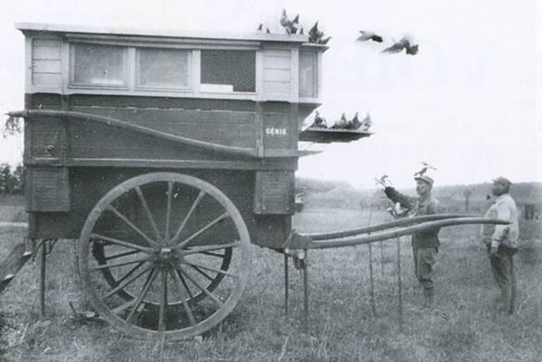 """Résultat de recherche d'images pour """"colombophile première guerre mondiale"""""""